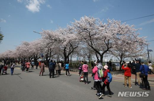 여의도 벚꽃축제. /사진=뉴시스