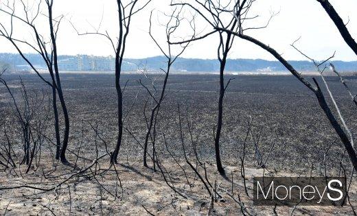 강원도 고성에서 산불로이 발생해 5일 강원도 속초 민가 인근 농경지가 전소됐다./사진=임한별 기자