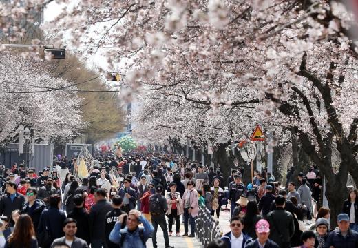 벚꽃 축제가 한창인 서울 여의도 윤중로 일대. /사진=뉴시스 이종철 기자