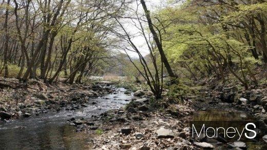 봄 기운이 완연한 도솔천(선운천). /사진=박성기 여행 칼럼니스트