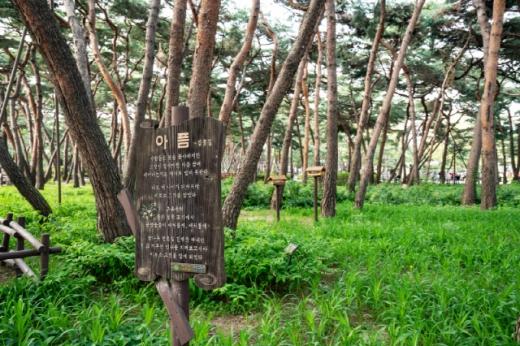 강북구 솔밭근린공원 100년생 소나무 숲. /사진=서울관광재단