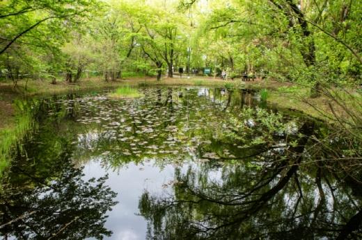 영등포구 여의도공원 자연생태의 숲 생태연못. /사진=서울관광재단