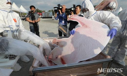 지난 4월30일 오후 정부세종컨벤션센터 주차장에서 열린 2019 아프리카돼지열병 가상방역훈련에서 방역 관계자들과 질소를 활용해 발병한 돼지를 살처분하고 있다. /사진=뉴시스