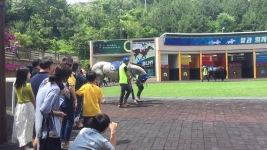 레이싱투어에 참여한 고객들이 경주마를 구경하고 있다./사진제공=렛츠런파크