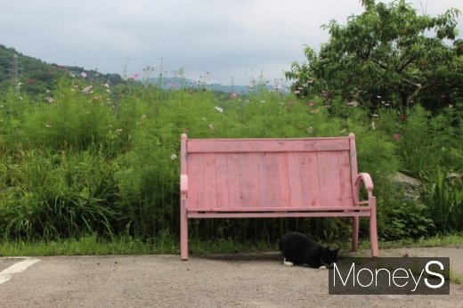 코스모스가 핀 예와생의 야외 공간. 고양이가 한가롭게 노닐고 있다. /사진=박정웅 기자