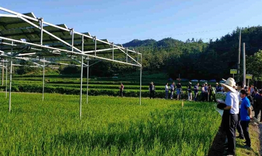 보성에서 열린 농업인 주도 '영농형태양광 발전 설명회'/사진=농협전남지역본부 제공.