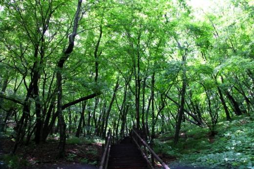 안렴대로 가는 숲길은 호젓하다. /사진=한국관광공사