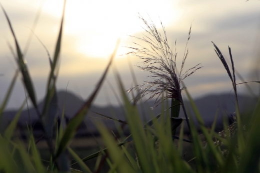 순천만습지 갈대꽃. /사진=한국관광공사