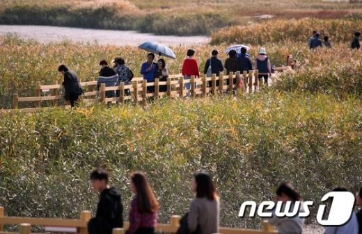 오는 26일부터 11월 3일까지 강진만 생태공원 일원에서 '강진만 춤추는 갈대축제'가 열린다. /사진=뉴스1