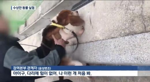 복제견 메이 실험 당시 모습. /사진=KBS 뉴스 방송 캡처