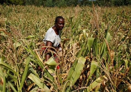 짐바브웨 수도는?… 유엔, 가뭄+경제 붕괴 '경고'