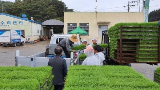 기장군은 동부산농업협동조합과 협력해 지난 15일부터 29일까지 관내 5개 읍·면 고령 농업인 64농가에 7408상자의 육묘를 농가에 제공했다./사진=기장군