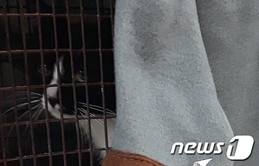 경기도는 10일 고양시 농업기술센터에서 '제1회 경기도 길고양이 중성화의 날'을 진행했다. / 사진제공=뉴스1