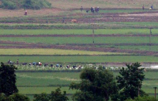 6·25전쟁 70주년을 맞은 25일 경기 파주시 오두산 통일전망대에서 바라본 북한 황해북도 개풍군 일대에서 주민들이 모내기를 하고 있다. /사진=뉴스1