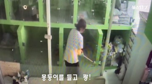 경기도 구리시의 한 애견호텔에서 충격적인 일이 발생했다. /사진=뉴스1TV 캡처