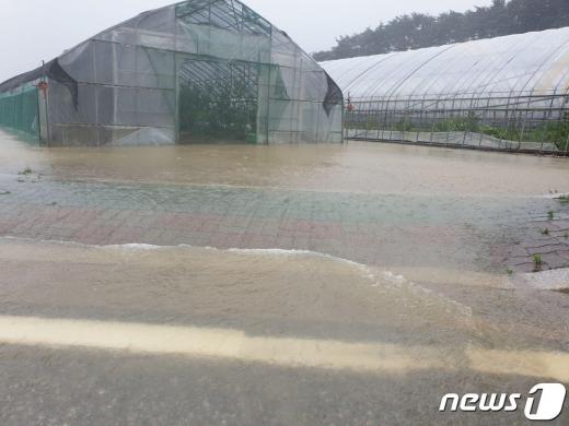 강원 강릉·속초 지역에서 최고 일 강수량을 뛰어넘는 호우가 이어졌다. /사진=뉴스1