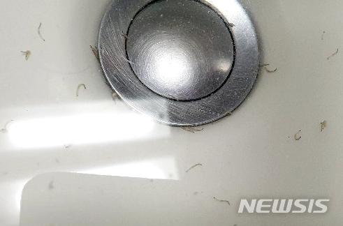 20일 서울시 상수도사업본부에 따르면 지난 19일 밤 11시쯤 서울시 수돗물에서 유충이 발견됐다. 사진은 지난 15일 오전 인천시 부평구 갈산동의 한 아파트 수돗물에서 나온 유충. /사진=뉴시스
