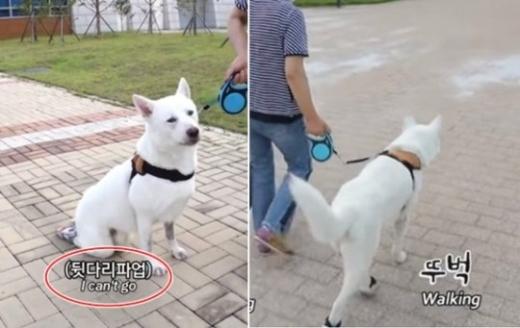 SBS 'TV동물농장'과 '애니멀봐' 제작진이 장애견 호돌이 관련 왜곡된 편집에 대해 재차사과했다. /사진=유튜브 캡처