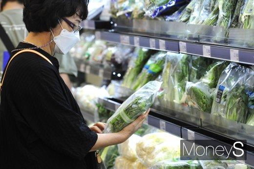 [머니S포토] 출하량 감소에 채소 가격 급등