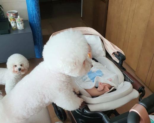 배우 서효림의 반려견이 유아차 안의 아이를 보고 있다. /사진=서효림 인스타그램