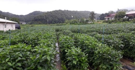 파주시는 농림축산식품부에서 추진하는 밭작물 재배작물에 정보통신기술(ICT)을 적용하는 노지 스마트영농 모델개발 사업을 9개 농가에서 추진 중이라고 25일 밝혔다. / 사진제공=파주시