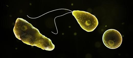 지난 27일 CNN 등에 따르면 텍사스주 환경품질위원회(TCEQ)는 이날 오후 수돗물에서 '뇌 먹는 아메바'로 알려진 파울러 자유아메바가 검출됐다고 밝혔다. /사진=미국 질병통제예방센터