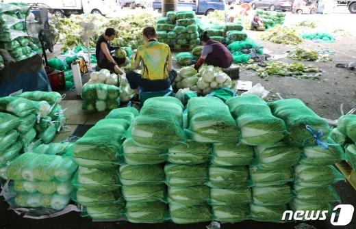 서울 송파구 가락시장에서 배추를 판매하고 있다./사진=뉴스1
