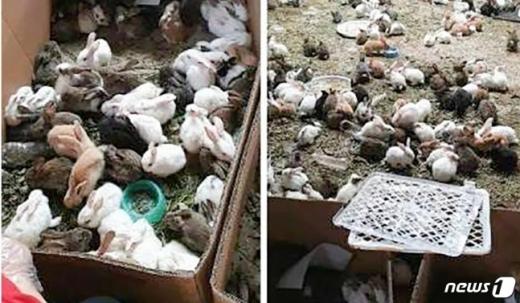 중국 허난성 뤄허의 둥싱 물류창고에서 살아남은 토끼들. /사진=웨이보·뉴스1