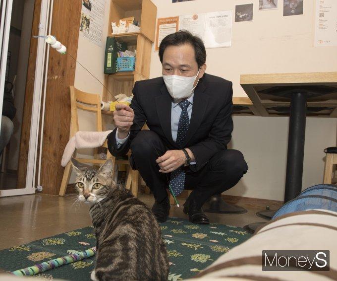 [머니S포토] 구조된 고양이와 놀아주는 우상호