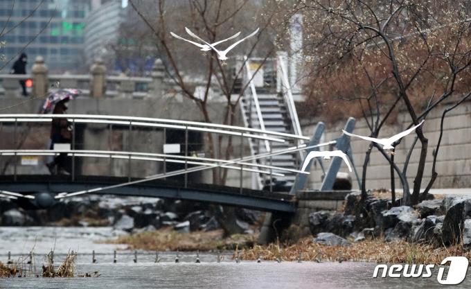 겨울비가 내린 21일 오후 서울 청계천. 2021.1.21/뉴스1 © News1 오대일 기자
