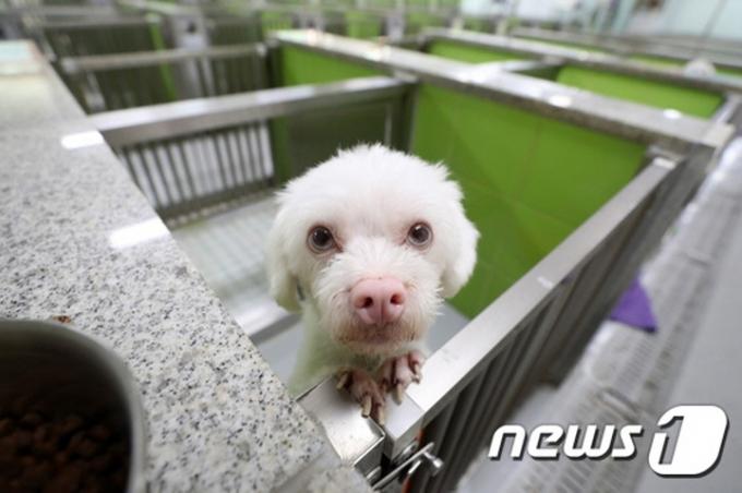 지난 달 26일 경기도의 한 유기견센터에서 주인을 기다리는 유기견. /사진=뉴스1