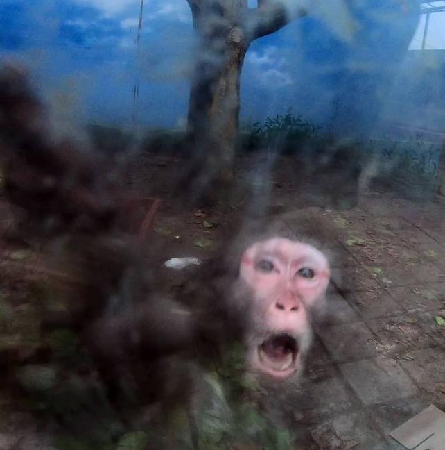 휴장 중인 대구의 한 동물원에서 동물들을 방치했다는 의혹이 제기됐다. /사진=비구협 인스타그램