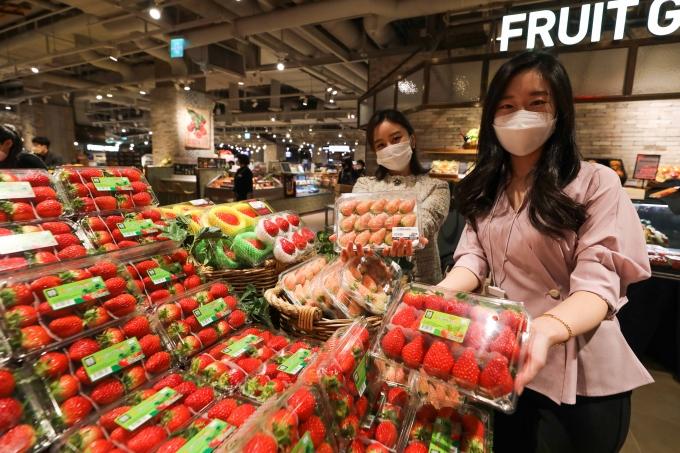AK플라자가 다음 달 4일까지 전 지점 식품관에서 다양한 품종의 딸기를 할인 판매한다. 행사 기간 설향, 장희, 금실, 죽향, 아리향, 만년설 등 국내 유통되는 대부분의 딸기 품종이 20%가량 할인된 가격으로 판매될 예정이다. /사진=AK플라자