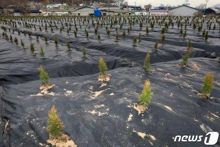 공공기관(LH) 직원이 '꾼'보다 더하네… 나무 심어 '50배 보상' 노렸나?