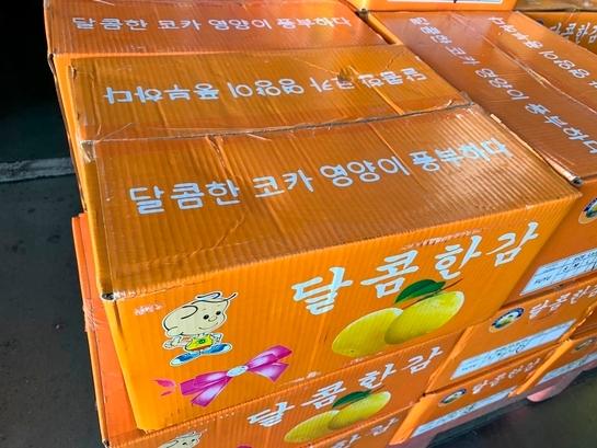 최근 중국산 과일이 한국산으로 둔갑한 채 동남아시장에서 판매되는 일이 빈번하다. 한국어로 포장된 박스에 담긴 중국산 감./사진=농식품부 제공