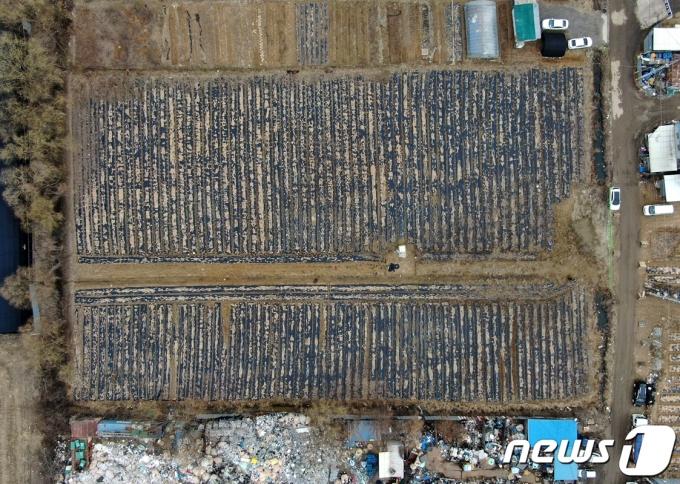 LH 직원들이 사들인 경기도 시흥시 과림동 소재 농지 일대의 모습. 2021.3.4/뉴스1 © News1 구윤성 기자