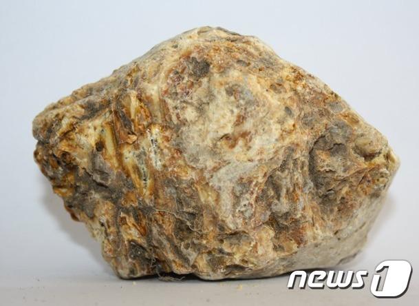 용연향은 수컷 향유 고래의 배설물로 고급 향슈의 재료로 사용된다.© 뉴스1