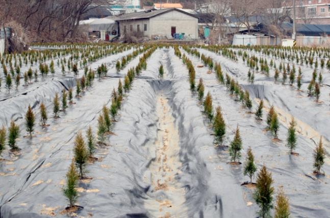 과림동 3996㎡ 토지 농업계획서에 따르면 LH 직원들은 땅을 매입 후에 주재배 예정 작목을 '벼'라고 기재했다. 실제로는 벼보다 비교적 관리가 쉬운 나무 묘목이 심어졌다. /사진=뉴시스