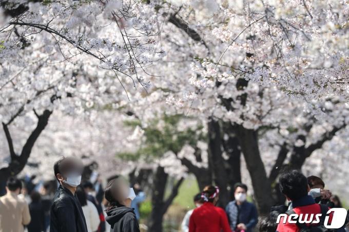 서울 영등포구가 올해 봄꽃축제를 온라인, 오프라인으로 구분해 진행한다./ 사진=뉴스1
