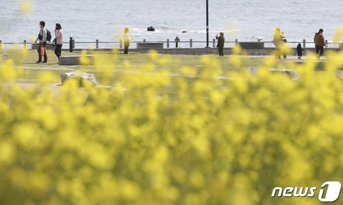 일요일인 11일에도 일교차가 큰 전형적인 봄날씨가 이어질 전망이다. 사진은 10일 울산 울주군 간절곶공원을 찾은 시민들이 활짝 핀 유채꽃을 보며 봄 정취를 즐기는 모습. /사진=뉴스1
