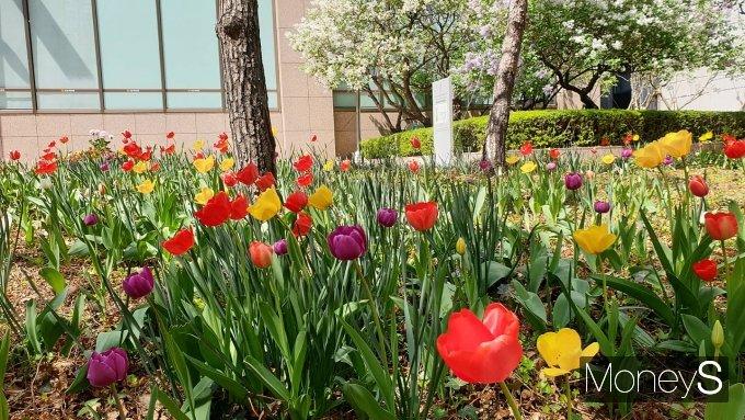 일요일인 오늘(11일)은 맑고 일교차가 큰 전형적인 봄날씨가 이어진다. 사진은 서울 중구 서울파이낸스센터(SFC) 앞 화단에 꽃이 활짝 핀 모습. /사진=김화평 기자