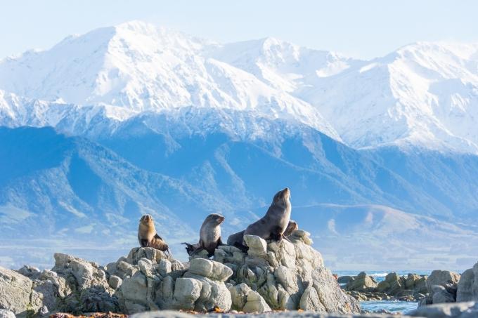 뉴질랜드 최고의 생태 관광지로 알려진 카이코우라. 뉴질랜드관광청 제공