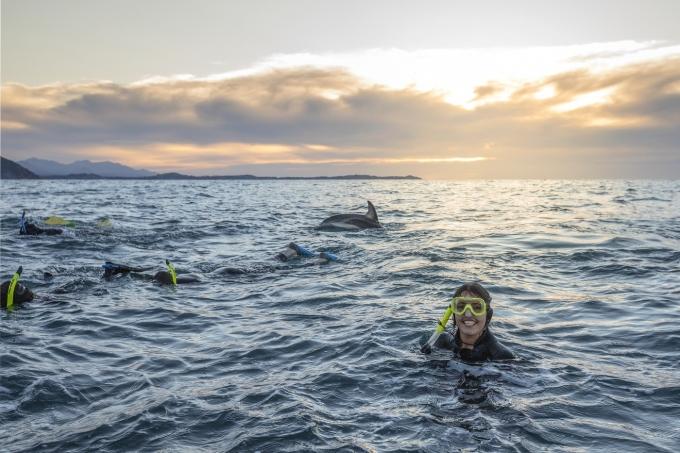 돌고래와 함께하는 수영