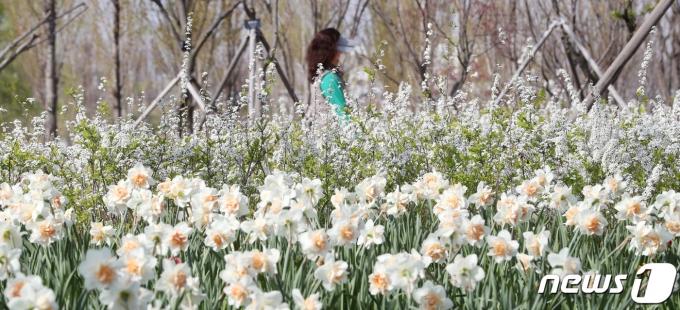포근한 봄 날씨를 보인 9일 서울 강서구 서울식물원에서 시민들이 봄꽃을 감상하고 있다. 2021.4.9/뉴스1 (사진은 기사 내용과 무관함) / 뉴스1 © News1