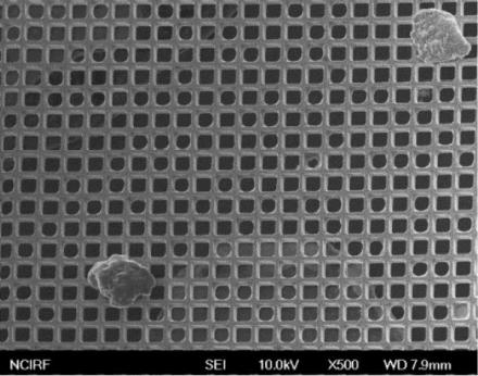 싸이토젠 HDM 칩에 분리된 live CTC./사진=싸이토젠