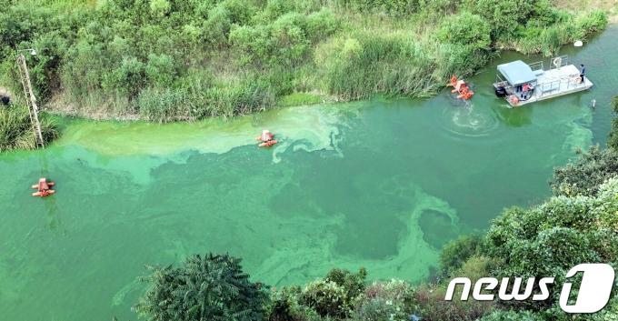 4대강 보를 개방하자 강과 육지의 생태계가 개선되는 경향을 보였다. 사진은 2018년 8월 충남 부여군 백제보 일원의 금강 물줄기가 녹조로 녹색을 띄는 가운데 녹조방지 수차가 설치되고 있는 모습. /사진=뉴스1