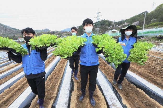 KT&G가 코로나19 여파로 인력난을 겪는 잎담배 농가를 돕기 위해 충북 제천지역에서 잎담배 이식 봉사를 실시했다. /사진=KT&G