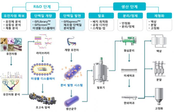효소 개발 및 생산 단계 이미지./자료=제노포커스