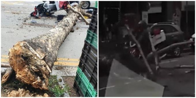 최근 한 오토바이 운전자가 갑자기 쓰러진 나무에 걸려 사고를 당했다./ 사진=커뮤니티 캡처