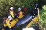 템스강에서 가까스로 구조된 밍크고래, 결국…